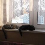 картина кошки на окне