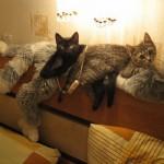 сколько кошек?