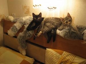 Неожиданная картина… Кошки!