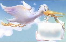 ptiza-letit-dostavka